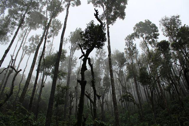 Tenside auf Palmöl-Basis: oft auf Kosten des Regenwaldes