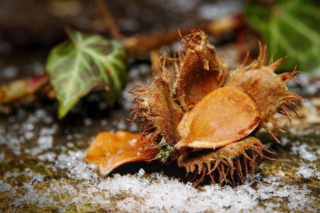 Halten Eichhörnchen Winterschlaf? Alles über Eichhörnchen im Winter