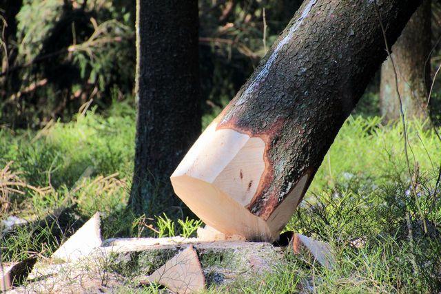 Baum fällen ist oft nicht nötig