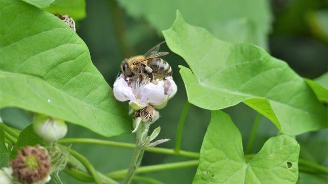Doku-Tipp: Gift im Honig, tote Bienen