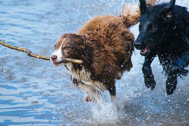 Die Wirkung von Schwarzkümmel gegen Zecken ist zwar noch nicht eindeutig belegt, bei Hunden gibt es jedoch Hinweise auf eine mögliche Abwerkwirkung des Öls.