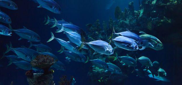 Meere schützen Fische