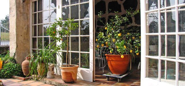 Zitronenbaum überwintern: Das ideale Winterquartier - Utopia.de