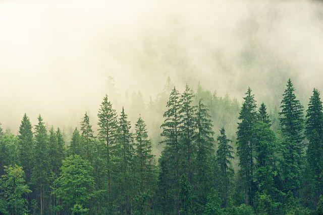 Mittlerweile ist es auch wissenschaftlich genau belegt, in welchem Maße Aufforstung zum Klimaschutz beitragen kann.