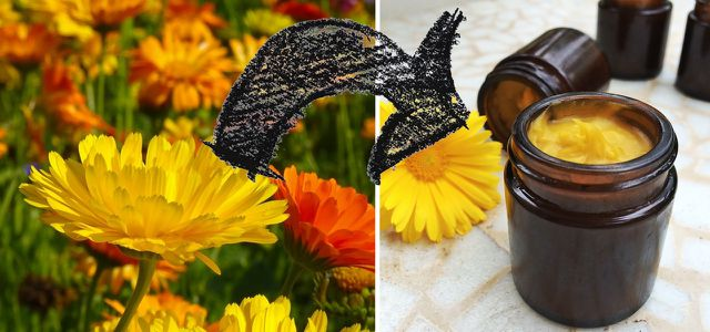 Ringelblumensalbe Selber Machen: Rezept Für Eigene