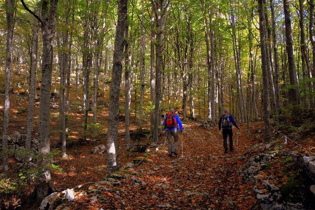 Wie andere Ausdauersportarten bringt auch Nordic Walking dein Herz-Kreislaufsystem und deinen Stoffwechsel in Schwung.