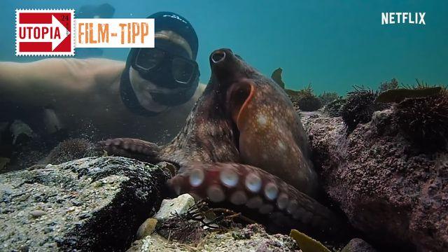 """Doku-Tipp: """"My Octopus Teacher"""""""