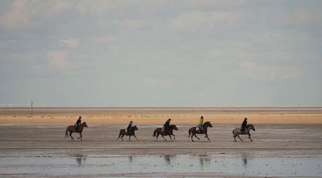 Pferde gehören auf Juist zum Alltag.