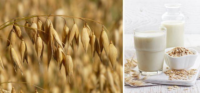 Pflanzliche Milch wird zum Beispiel aus Soja, Hanf, Hafer oder Reis gemacht