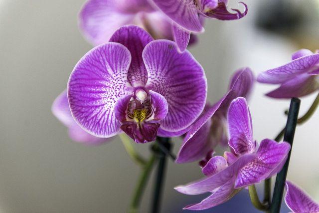 Beim Umtopfen von Orchideen brauchst du viel Fingerspitzengefühl.