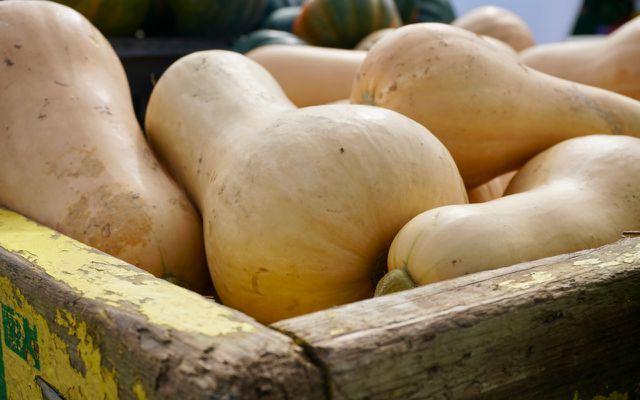 Butternut squash pumpkin skins are edible
