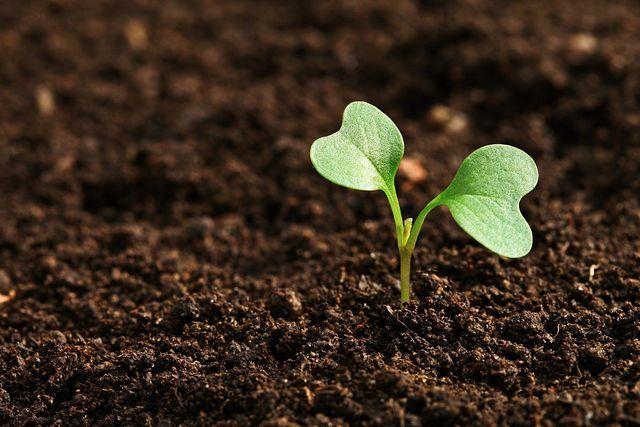 Hülsenfrüchte verbessern die Bodenqualität.