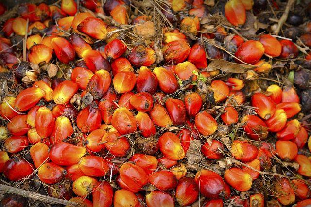 Für die Herstellung von Palmöl werden große Regendwaldflächen abgeholzt. Macauba könnte eine nachhaltigere Alternative darstellen.