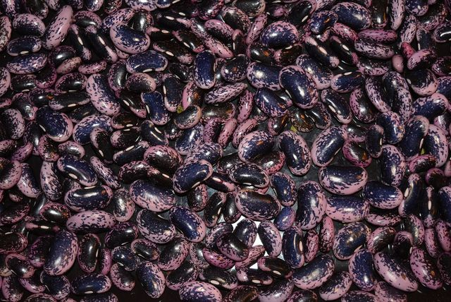 Feuerbohnen werden in Österreich auch Käferbohnen genannt.