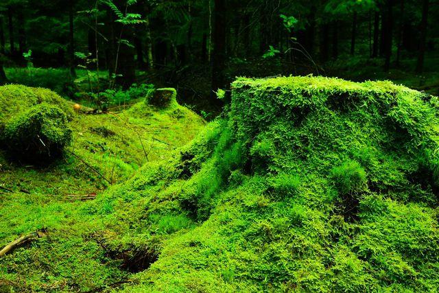 Zum Ökosystem Wald gehören nicht nur Bäume, sondern auch Sträucher, Gräser und Moose.