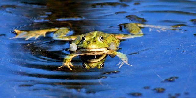 Viele Gewässer oder wassernahe Biotope zählen zu den besonders geschützten Biotopen.