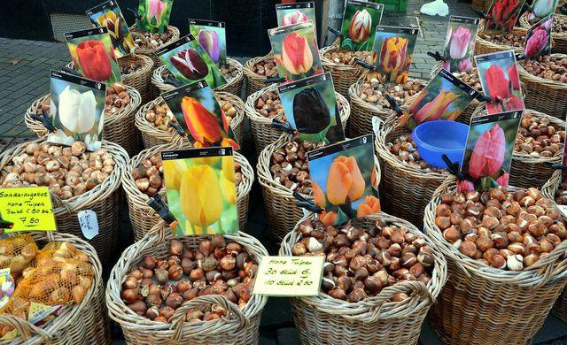 Im Herbst gibt es im Gartenfachhandel viele Blumenzwiebeln zu kaufen