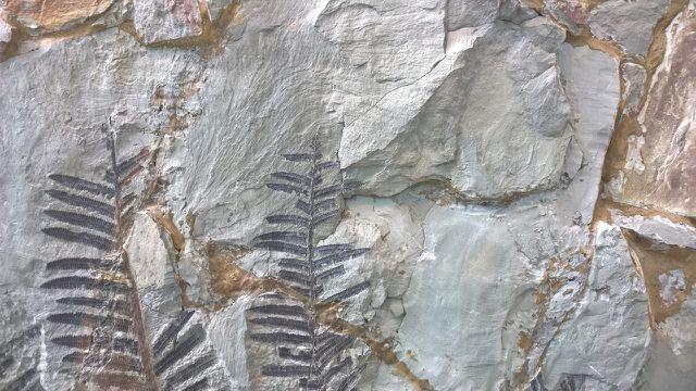 Bisher haben auch Fossilien ein Erdzeitalter markiert.