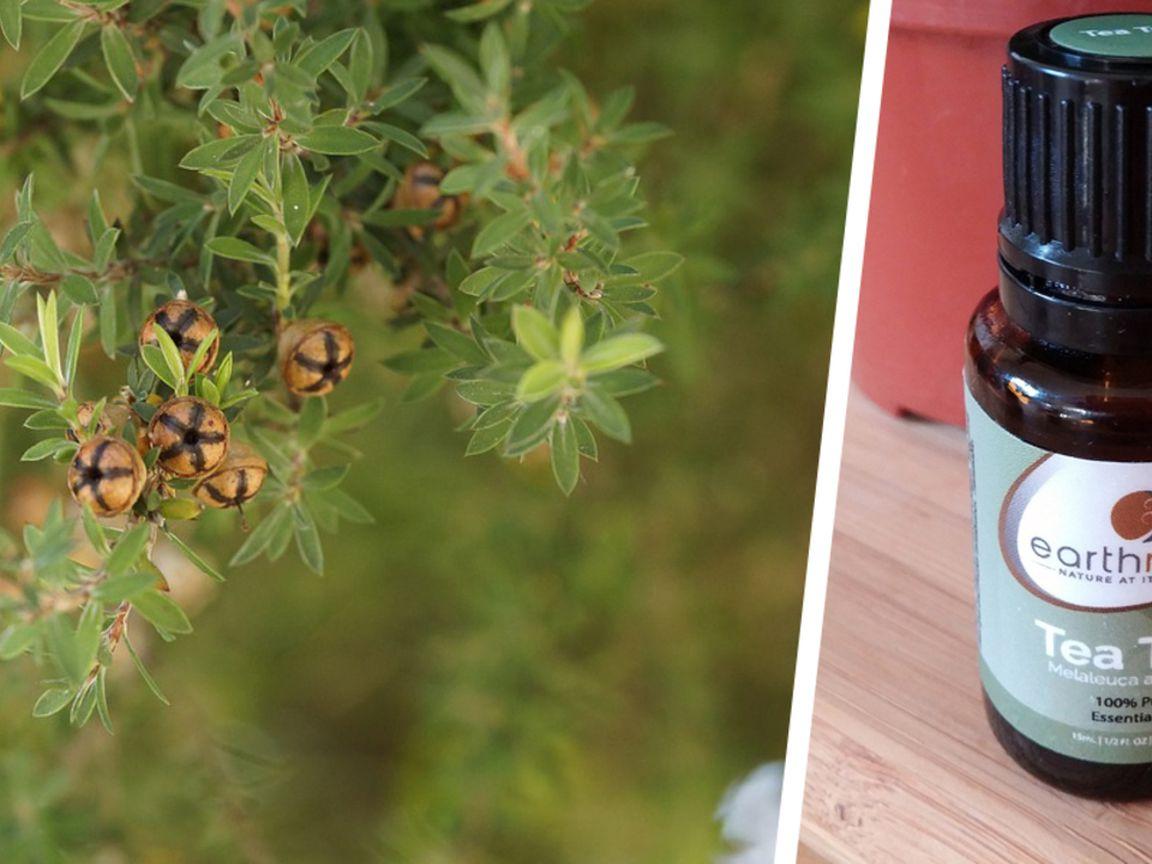 Intimbereich teebaumöl Intimpflege Produkte