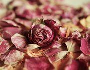 Rosenblätter essen