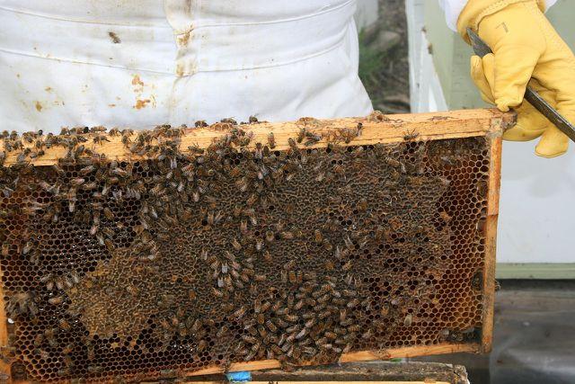 Honig direkt vom Imker - regional, fair und ökologisch.