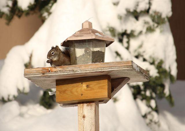 Nur im Herbst und im Winter solltest du Eichhörnchen füttern.