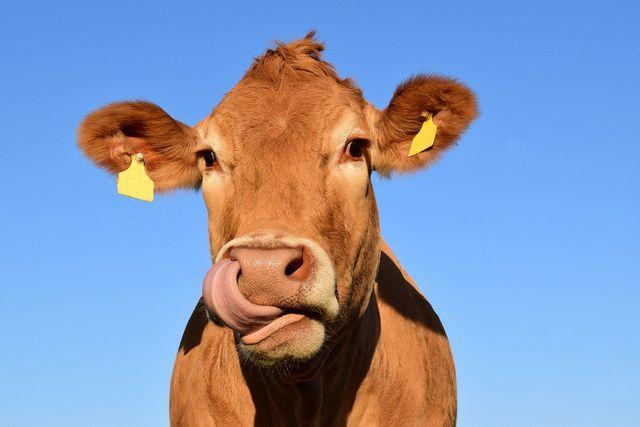 Während du schrittweise die Beikost einführst, solltest du deinem Kind auf keinen Fall neben dem Getreide-Obst-Brei weitere Milchprodukte geben.