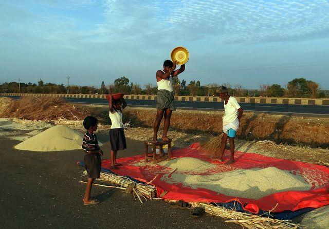 Hirse-Ernte in Indien: Die Schale muss vom Korn getrennt werden.