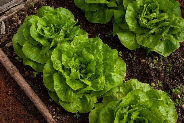 Baust du selbst Obst und Gemüse an, kannst du sie für das Essen deiner Gartenparty verwenden.