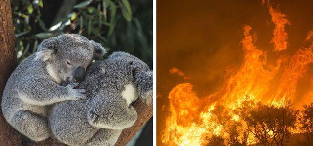Australien Tiere töten