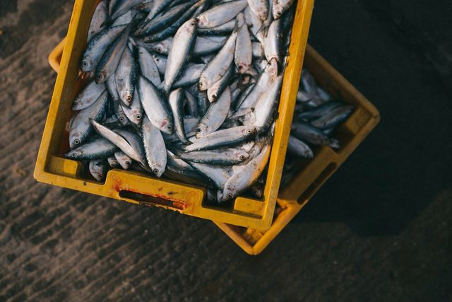 Human environment interaction has helped identify solutions for environmental issues — for example in the fishing industry.