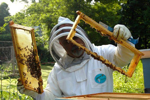 """Rohen Honig erkennst du an der Kennzeichnung """"Echter Deutscher Honig""""."""