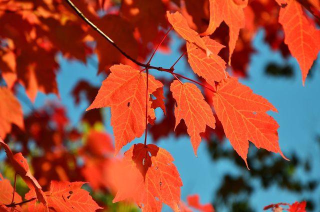 Herbstliche Blätter machen die dunkle Jahreszeit bunt.