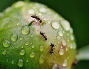 Ameisen im Hochbeet