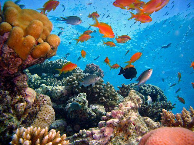 Neben der Errichtung mariner Schutzräume ist effektiver Klimaschutz von zentraler Bedeutung.