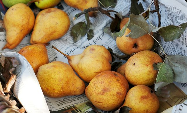 Birnen geben dem Birnensenf eine fruchtige Note.