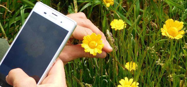 Pflanzen Per App Bestimmen Die Besten Tools Utopiade