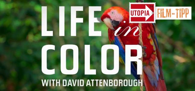 Serie David Attenborough