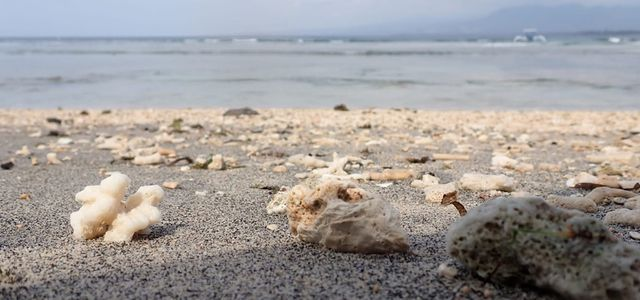 Microplastics in the oceans: sources
