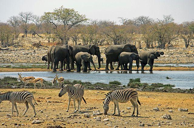 Wasserloch im Etosha-Nationalpark wikingerreisen-afrika-kaza-2-640 nachhaltiger Tourismus