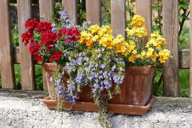 Topfgarten mit Blumen, die gut für Insekten sind.