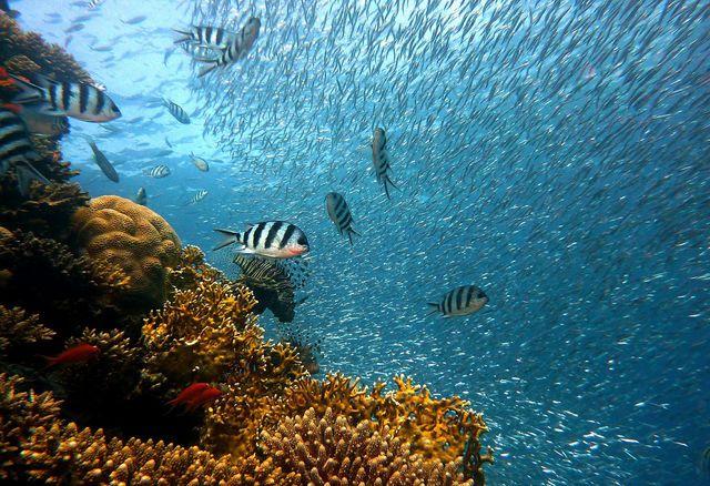 """""""Leben unter Wasser"""" ist das 14. Ziel für mehr Nachhaltigkeit."""
