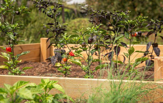 Für das Hochbeet mit Gemüse eignet sich Rasenschnitt, Stroh oder Kompost besonders.