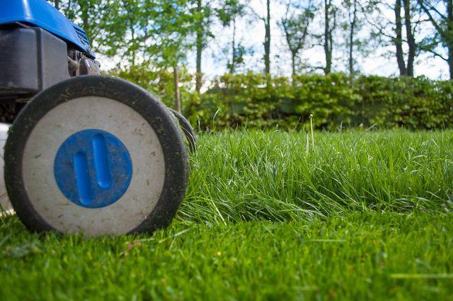 Rasen überdüngt oder zu kurz gemäht?