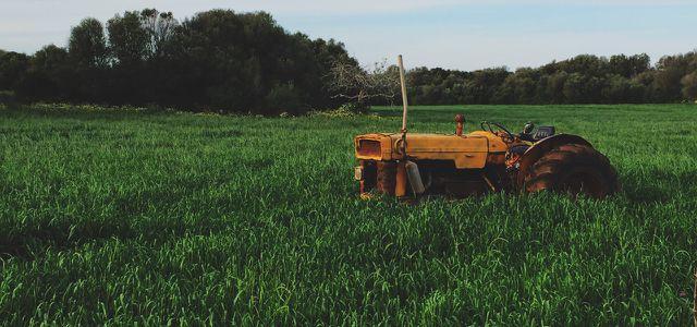 Studie: Bio-Anbau besser als konventioneller