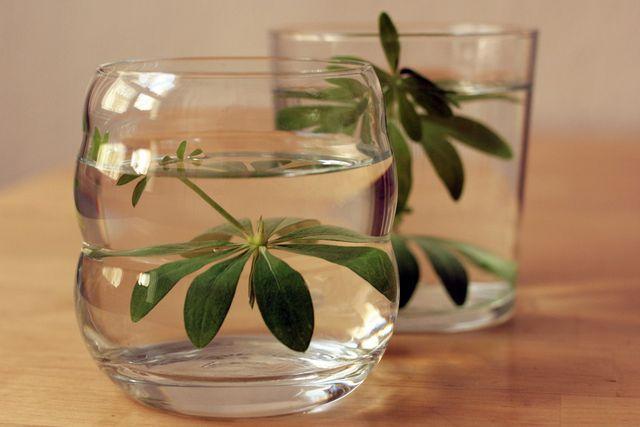 Waldmeister-Wasser schmeckt sehr erfrischend.