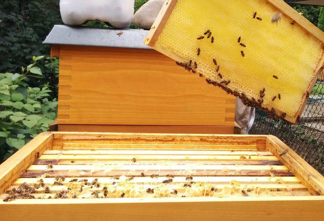 Bienenpatenschaft: Anbieter im Überblick