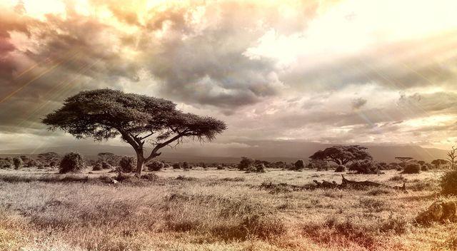 In trockenen Regionen entstehen Savannen und Steppen anstelle von Wäldern.