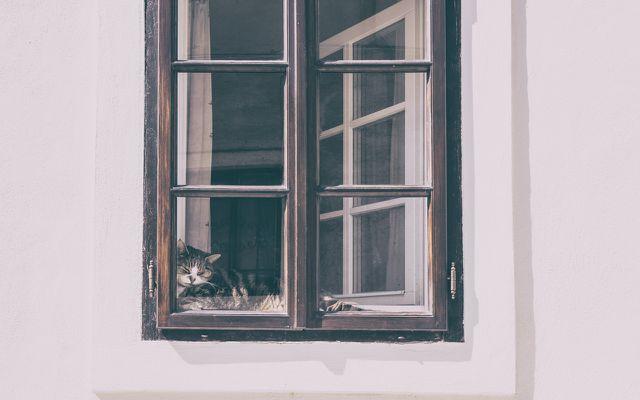 Bird safety how to make windows safe for birds