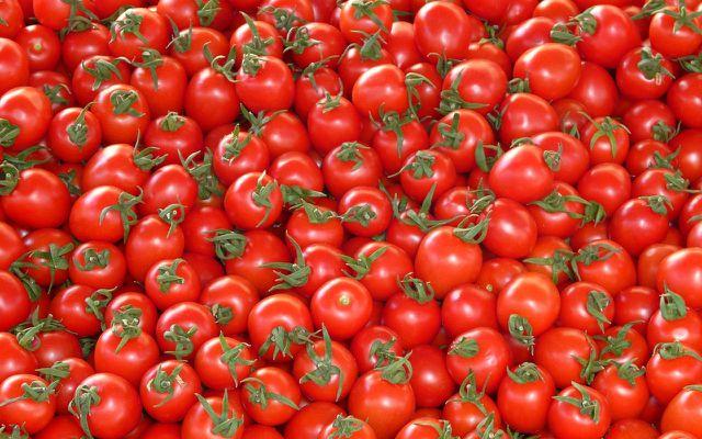 Tomaten, die für den kommerziellen Vertrieb angebaut werden, sollen einheitlich aussehen.